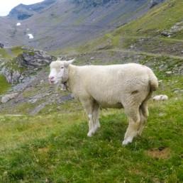 Swiss Alps 2017, Engital