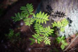 Tiheässä metsässä auringon valo pääsee välillä maahankin asti.