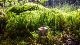 Yksinäinen sieni.